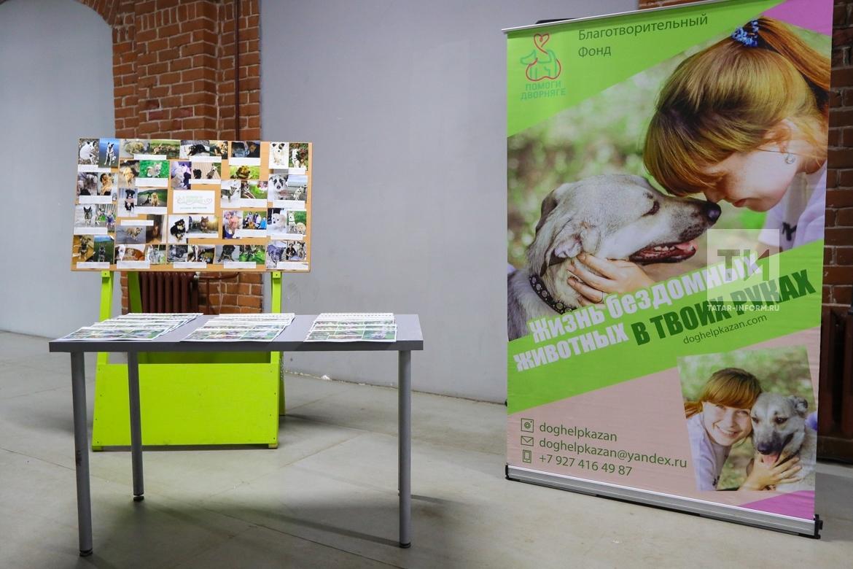 """Круглый стол """"Как убрать бездомных животных с улиц. Успешный и гуманный опыт Германии"""""""