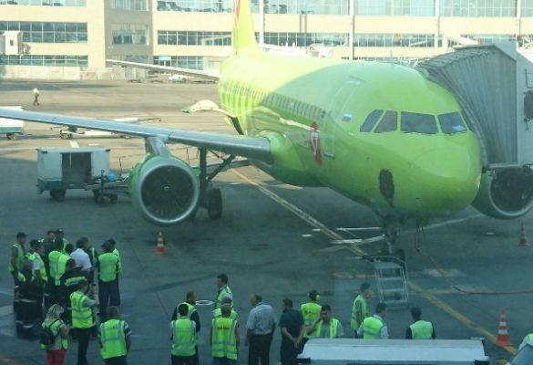 Самолет из Москвы в Казань задержали из-за роя пчел